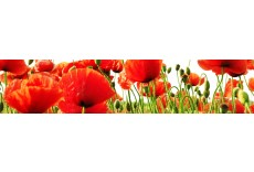 Kchenrckwand Mohn B